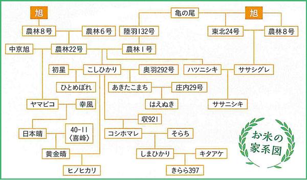 お米の家計図